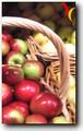 La enfermedad de Crohn. Síntomas, diagnóstico, tratamiento y pautas dietéticas. | Biologia humana | Scoop.it