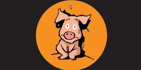 Castration à vif des porcelets : l'affiche que la Bretagne ne veut pas voir - Le Huffingtonpost | Le Fil @gricole | Scoop.it