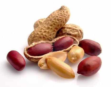 Eating nuts linked to 20% cut in death rates | Shrewd Foods | Scoop.it