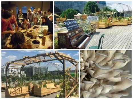 Atelier @Cité Mode&Design : Faites pousser vos propres Pleurotes | Agriculture citadine | Scoop.it