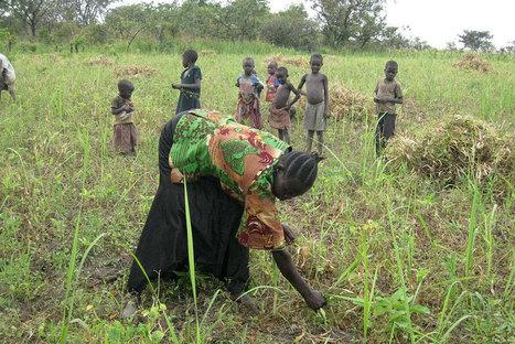L'OIT considère que l'agriculture doit être la priorité économique numéro 1 de l'Afrique | Questions de développement ... | Scoop.it