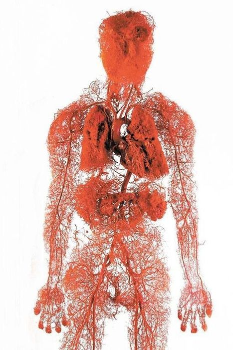 Blood Vessels in the Body [Infographic] - BestInfographics.co   Techno-Miscellany   Scoop.it