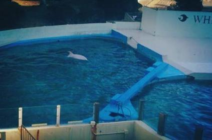 """""""Angel"""" the baby albino dolphin kidnapped Two weeks ago Gets To Live This Way Now because of You Weirdos 