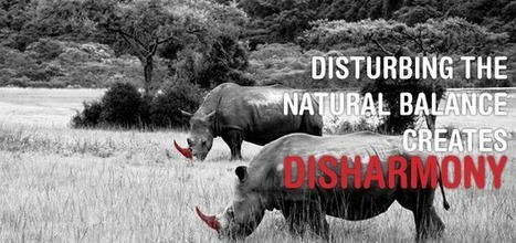 Saving the rhino through disharmony | What's Happening to Africa's Rhino? | Scoop.it