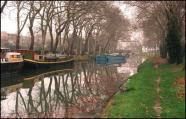 Canal du Midi: l'abattage de platanes malades devrait doubler à 4.000 arbres | Toulouse La Ville Rose | Scoop.it
