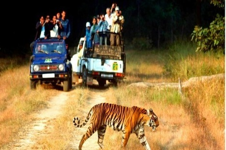 Enjoy This Summer with Family at Corbett National Park | Wildlife in India | Scoop.it