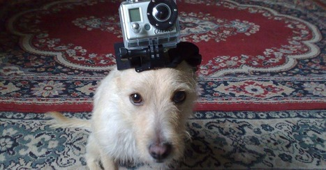 12 Ways to See the World Through Animals' Eyes | Prozac Moments | Scoop.it