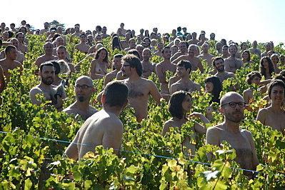 Le Vin Nature bientôt interdit?   Vins nature, Vin de plaisir   Scoop.it