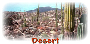 Cold Deserts of the World | Cold Desert Biome | Scoop.it