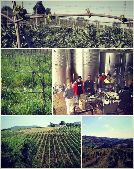 """TerroirMarche: """"Organic Winemakers"""" in Le Marche 