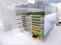 Les fermes urbaines poussent à vue d'œil | Science et Santé Naturelle | Scoop.it