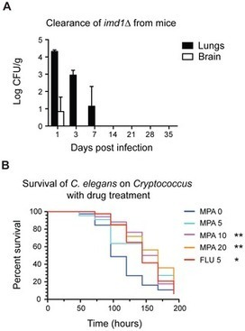 PLOS Pathogens: De novo GTP Biosynthesis Is Critical for Virulence of the Fungal Pathogen Cryptococcus neoformans | Plant-Microbe Interaction | Scoop.it