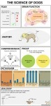 The Science Of Dogs [infographic] | Dog Love | Scoop.it