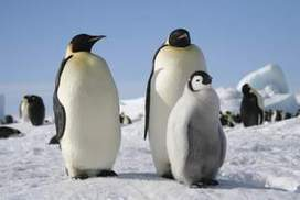 Record cold clocked in Antarctica   Geography in the classroom   Scoop.it