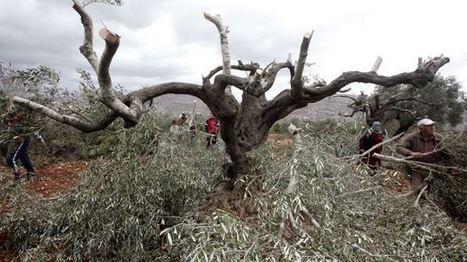 Israeli settlers raid Palestinian village | Life is wonderful ! | Scoop.it