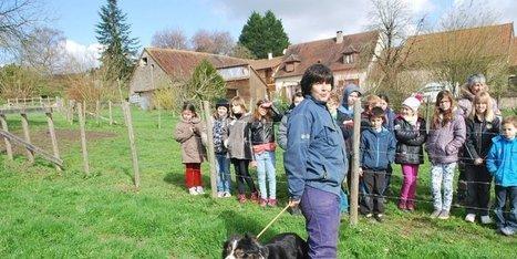Les chiens de troupeau ont la cote | Agriculture en Dordogne | Scoop.it