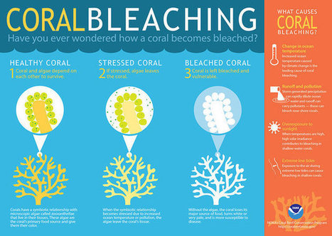 Sunscreen Could Be Killing The World's Coral Reefs, Study Says | GMOs & FOOD, WATER & SOIL MATTERS | Scoop.it