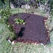Protección y cuidado del suelo de la huerta en primavera | ECOagricultor | Horticultura | Scoop.it