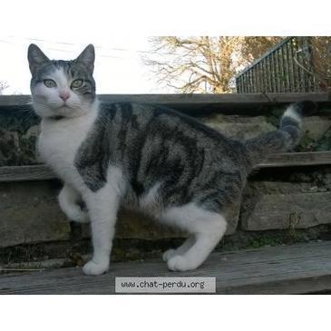 #172546 chatte trouvée à SEYSSUEL | Tourisme en pays viennois | Scoop.it