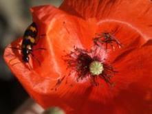 Nature et histoire à abbaye de Valsaintes | Carpentras Holidays | Scoop.it