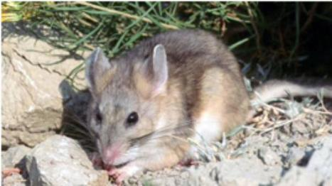 Resurveying California's Wildlife | Sustainability Science | Scoop.it
