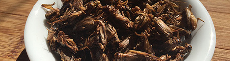 Aussie tastebugs: the unlikely business success of breeding edible insects - Business Research and Insights | Entomophagy: Edible Insects and the Future of Food | Scoop.it
