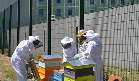 Rush sur les ruches | Des 4 coins du monde | Scoop.it