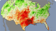 Plant Stress Paints Early Picture of Drought | Plant Stress | Scoop.it