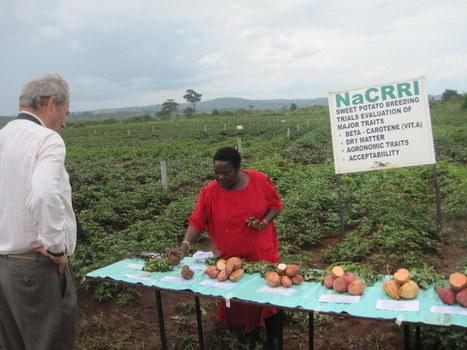 AGRA | Questions de développement ... | Scoop.it