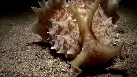 Vidéo Full HD | Philippines - Aliens en plongée de nuit ! | Plongeurs.TV | Scoop.it