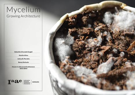 Mycelium | e-merging Knowledge | Scoop.it