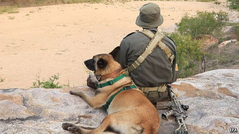 In the struggle to save the rhino, dogs still beat drones | liu wai  ling | Scoop.it