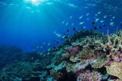 New study suggests coral reefs may be able to adapt to moderate climate change | Sustain Our Earth | Scoop.it