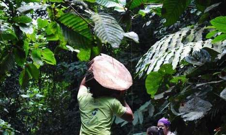 Partially logged rainforests could be emitting more carbon than previously thought   GarryRogers Biosphere News   Scoop.it