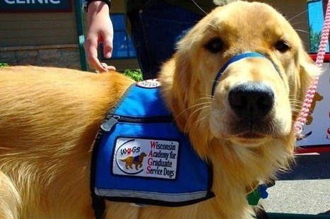 8 Types Of Service Dogs We Should Be Grateful For | Dog News | Scoop.it