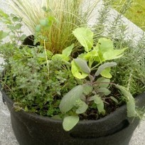 nature et potager en ville | | agriculture urbaine | Scoop.it