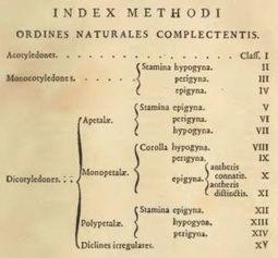Schémas de classification : thésaurus, taxonomie, ontologie... - Consulting et architecture interactive   Orangeade   Scoop.it