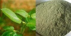 White Vein Kratom and Red Vein Kratom- What is the difference? - Empower Labs | Kratom | Scoop.it
