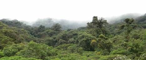 Bevar Regnskoven - Storylineforløb om bæredygtighed - Haubo Kurser og undervisning | Naturfag links, Kongerslev | Scoop.it