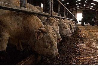 Spotlight: Livestock impacts on the environment | Walkerteach Geo | Scoop.it