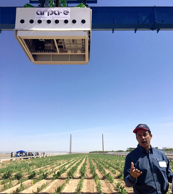 Massive Field Scanalyzer Studies Sorghum's Energy Potential | CALS in the News | Scoop.it