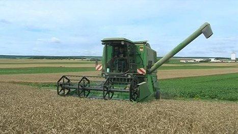 Plan d'aide aux agriculteurs : en Champagne, on reste sceptique - France 3 Champagne-Ardenne | L'actu agricole dans la Marne et la région | Scoop.it