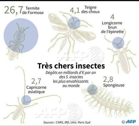 Les insectes envahissants affectent durement l'économie mondiale   EntomoNews   Scoop.it
