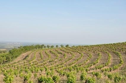 faugeres : Bédarieux | Vins et schistes | Scoop.it