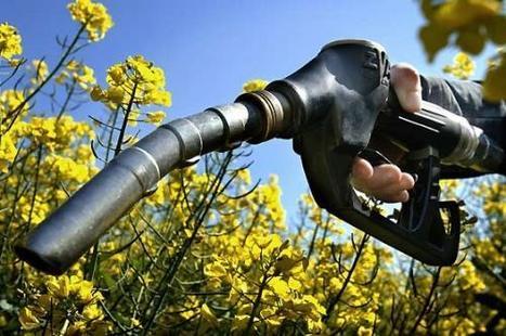 Quand l'agriculture sert à nourrir les machines aux dépens des humains | Questions de développement ... | Scoop.it