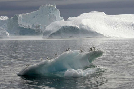 Cambio climático podría enverdecer a Groenlandia | Biologia | Scoop.it