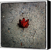 Leaf Photograph by Marcin and Dawid Witukiewicz - Leaf Fine Art Prints and Posters for Sale | Our Art | Scoop.it