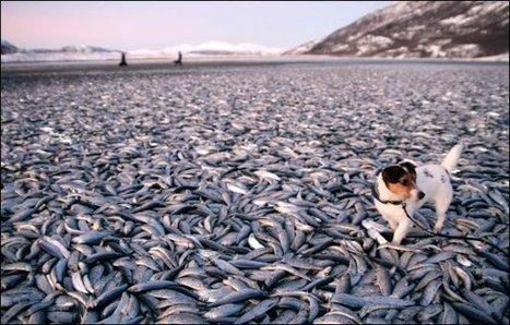 Des milliers de poissons s échouent | Mais n'importe quoi ! | Scoop.it