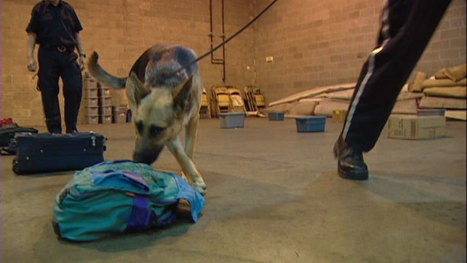 More companies using drug dogs for detection on work sites - Saskatchewan - CBC News | Drugs, Society, Human Rights & Justice | Scoop.it