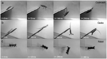 Robot Has Roach-Like Reflexes | Biomimicry | Scoop.it